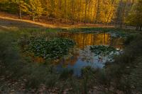 podzimni_holedna_g