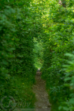 single_trail_kohoutovice_g