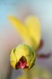 orchidej3_g