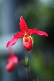 orchidej7_g
