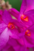 orchidej_arboretum_3_g.png