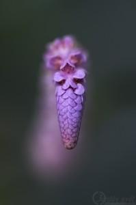 Vodní rostlina