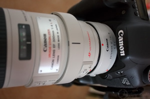 Canon EF300 mm f4L IS USM plus Canon extender 1.4x III