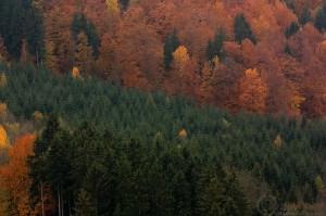Podzimní pohled z hradu Sovinec