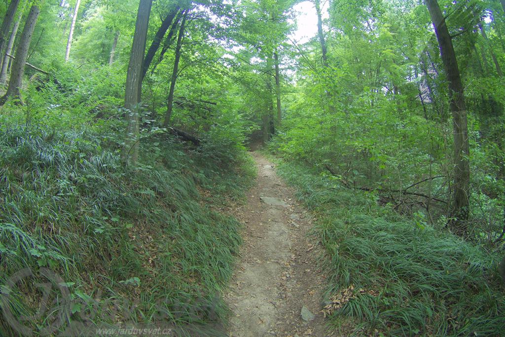 Značená cesta Národním parkem